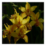Sunlit Yellow Orchids Elegant Floral Poster