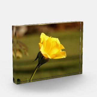 Sunlit Yellow Rose Acrylic Award