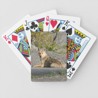 Sunning Coyote Card Deck