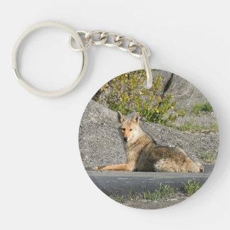 Sunning Coyote Keychain