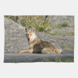 Sunning Coyote Kitchen Towel