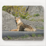 Sunning Coyote Mouse Pad