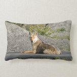 Sunning Coyote Throw Pillows