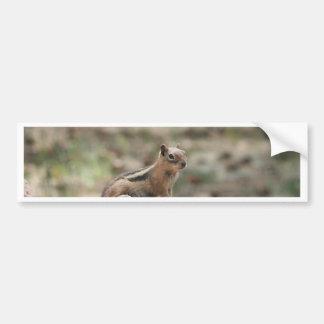 Sunning Ground Squirrel Bumper Sticker