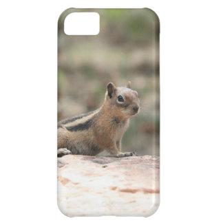 Sunning Ground Squirrel Case For iPhone 5C