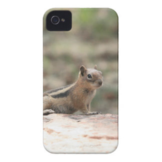 Sunning Ground Squirrel iPhone 4 Case