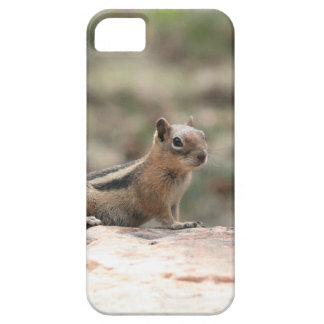 Sunning Ground Squirrel iPhone SE/5/5s Case