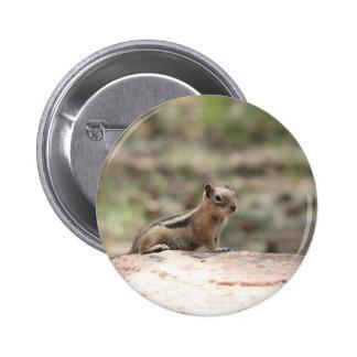 Sunning Ground Squirrel Pinback Button