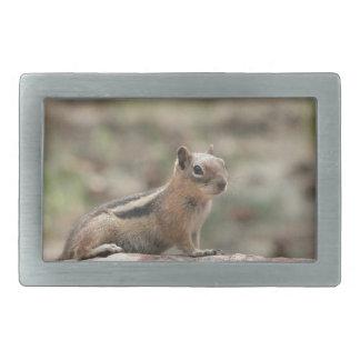 Sunning Ground Squirrel Rectangular Belt Buckle