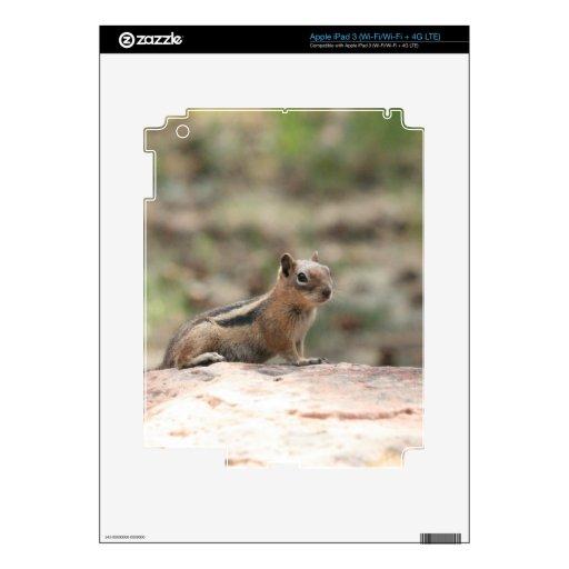 Sunning Ground Squirrel Decals For iPad 3