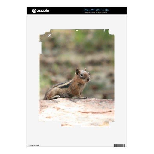 Sunning Ground Squirrel iPad 2 Skins