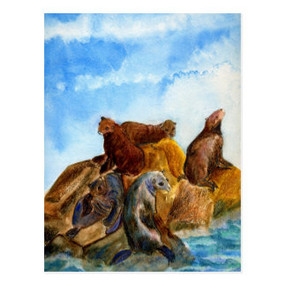 Sunning Harbor Seals - watercolor Post Cards