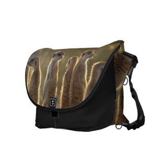 Sunning Meerkats - Messenger Bag