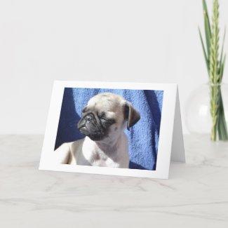 sunning pugs card
