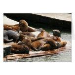 Sunning Sea Lions Card