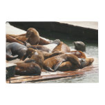 Sunning Sea Lions in San Francisco Placemat