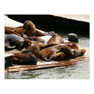 Sunning Sea Lions in San Francisco Postcard