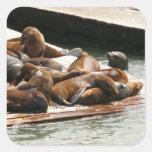 Sunning Sea Lions Sticker