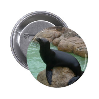 Sunning Seal Pinback Buttons