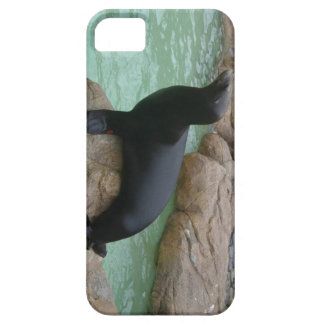 Sunning Seal iPhone 5 Cases