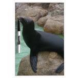 Sunning Seal Dry Erase Board