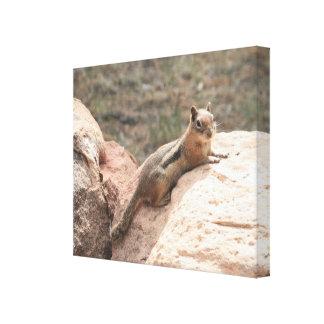 Sunning Squirrel Canvas Print
