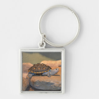Sunning Turtle Silver-Colored Square Keychain