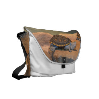 Sunning Turtle Messenger Bag