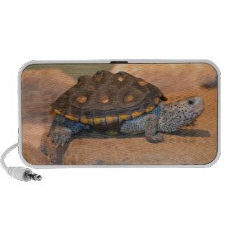 Sunning Turtle Speaker System