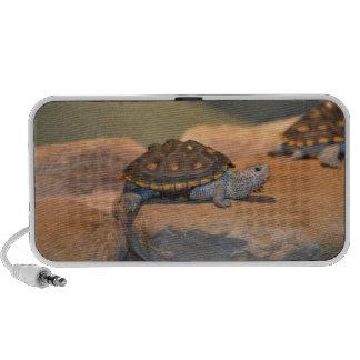 Sunning Turtle Speaker