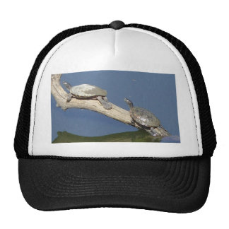 Sunning Water Turtle Ozarks Trucker Hats