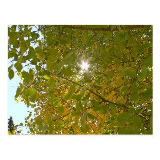 Sunny Aspen Postcard