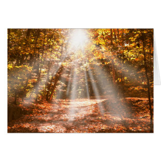 Sunny Autumn Vermont Woods - blank notecards Card
