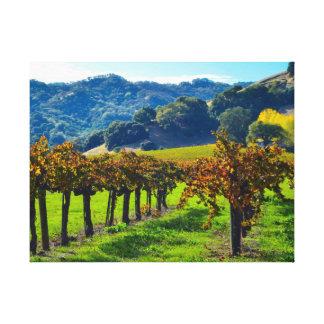 Sunny Autumn Vineyard Canvas Print