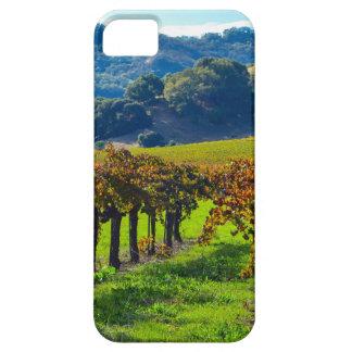 Sunny Autumn Vineyard iPhone 5 Covers
