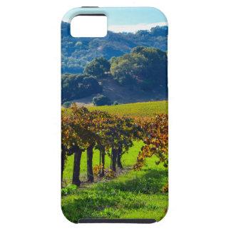 Sunny Autumn Vineyard iPhone 5 Cover