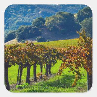 Sunny Autumn Vineyard Square Sticker
