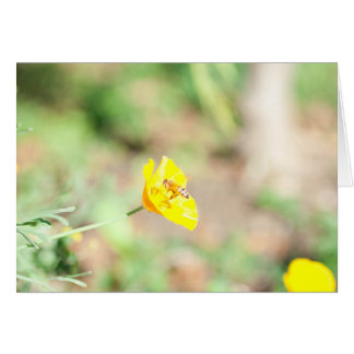 Sunny Bee NoteCard Card