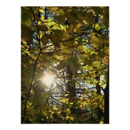 Sunny Beech Posters