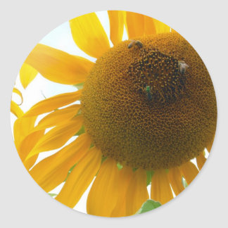 Sunny Bees Classic Round Sticker