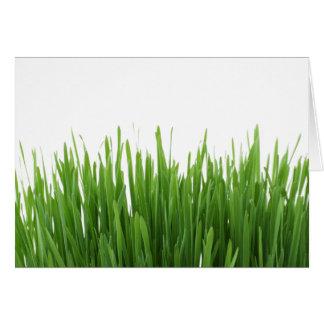 Sunny bright green grass photograph print card