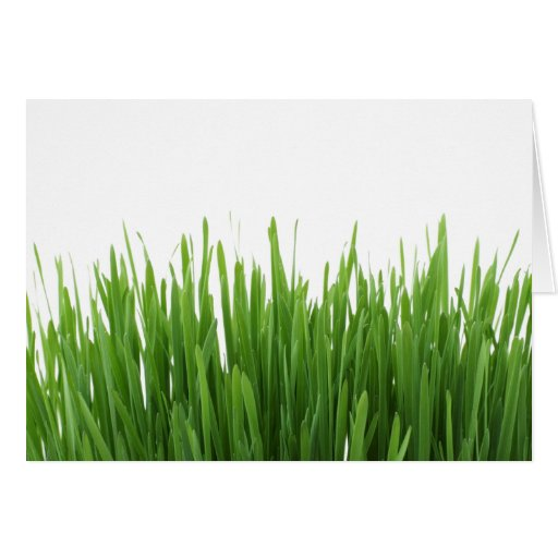 Sunny bright green grass photograph print cards