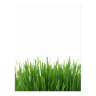 Sunny bright green grass photograph print postcard