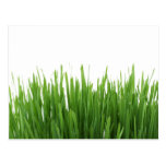 Sunny bright green grass photograph print postcards