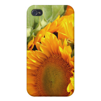 Sunny Bunch Cover For iPhone 4