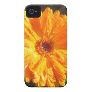 Sunny Calendula Raindrops iPhone 4 Case