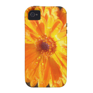 Sunny Calendula Raindrops iPhone 4/4S Case