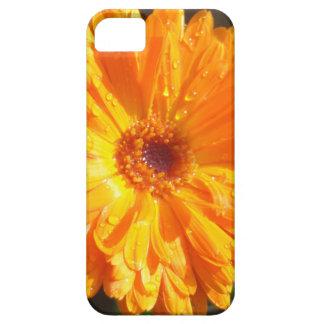 Sunny Calendula Raindrops iPhone 5 Case