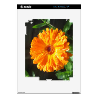 Sunny Calendula Raindrops Decal For The iPad 2