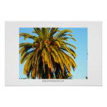 Sunny California Palm Tree Poster and Print